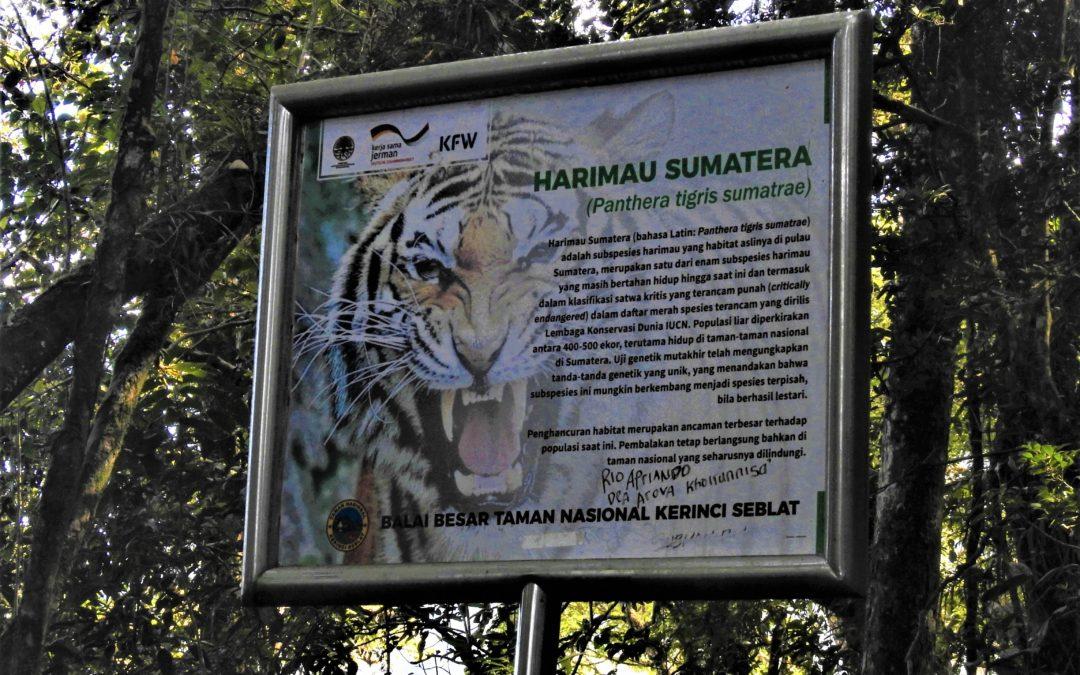 SUMATRA – MT. TUJUH – TIGER-TREK