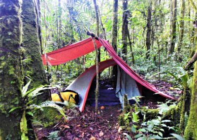 Jungle Camp - Our Guest