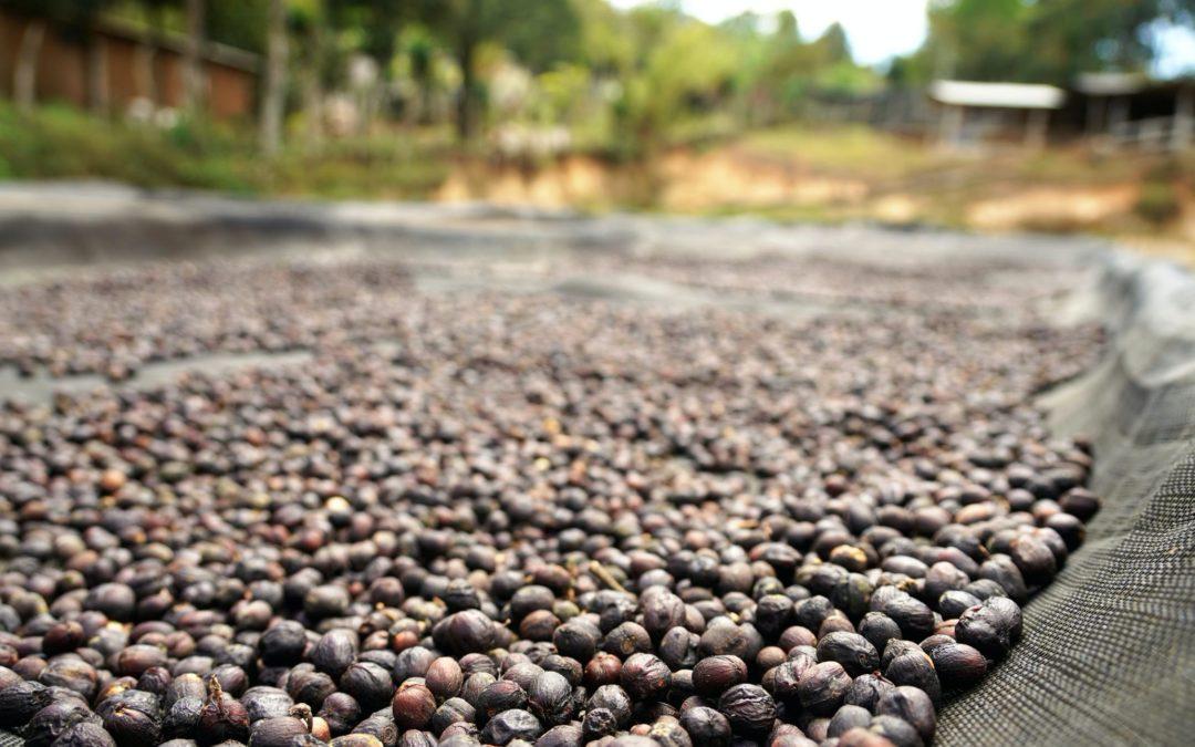 JAVA – COFFEE FARM-TOUR